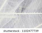macro structure white delicate... | Shutterstock . vector #1102477739