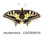 old world swallowtail  papilio... | Shutterstock . vector #1102506914