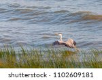 a heron hunting in the sea.... | Shutterstock . vector #1102609181