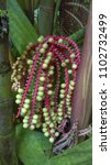 palm tree pods | Shutterstock . vector #1102732499