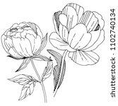 wildflower peony flower in a... | Shutterstock . vector #1102740134