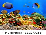 photo of a coral colony on a... | Shutterstock . vector #110277251