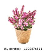 beautiful plant in pot on white ... | Shutterstock . vector #1102876511
