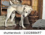 white dog is sad and alone. | Shutterstock . vector #1102888697