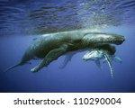 kapuziner | Shutterstock . vector #110290004