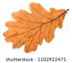 Back Side Of Autumn Broken Lea...
