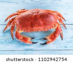cooked brown crab or edible... | Shutterstock . vector #1102942754
