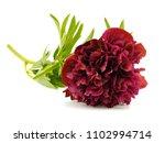 dark red peony flower on a...   Shutterstock . vector #1102994714