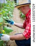 farm fresh veggies | Shutterstock . vector #1103037329