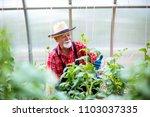 farm fresh veggies | Shutterstock . vector #1103037335