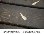 maple helicopter seed on wood... | Shutterstock . vector #1103053781