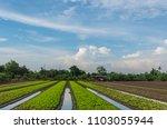 vegetable growers asia farmers | Shutterstock . vector #1103055944