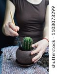 Small photo of woman repotting Pachypodium cactus to new pot