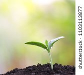 pumpkin sprout planting   Shutterstock . vector #1103113877