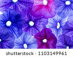 background from flower petals   ... | Shutterstock . vector #1103149961