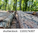 woody landscape of forests of... | Shutterstock . vector #1103176307