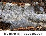 birch bark piece close up | Shutterstock . vector #1103182934
