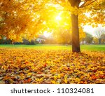 Colorful Foliage In The Autumn...