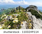 the flowers on the great... | Shutterstock . vector #1103249114