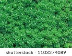 Small photo of Bright summer pattern with many fleshy leaves, flowers in shape of roses. Abstract textured backdrop with green succulent. Carpet of plants filled picture. Rhodiola pachyclados. Crassulaceae family.