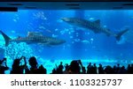 okinawa  japan   may 13  2018 ...   Shutterstock . vector #1103325737