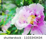 the beautiful abstract complex...   Shutterstock . vector #1103343434