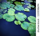 Lily Pads On The Surface Of A...
