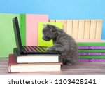 Stock photo one fluffy cute small kitten sitting next to a miniature laptop computer on a desk of books with 1103428241