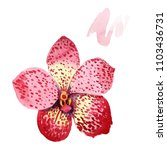 red orchid wanda. floral...   Shutterstock . vector #1103436731