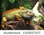 bright green monitor lizard...   Shutterstock . vector #1103527517