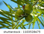 red color bugs up on tree | Shutterstock . vector #1103528675