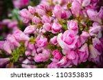 Stock photo roses 110353835