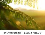 Small photo of close up leaves exposed to the morning sun light
