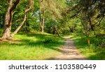 typical dutch landscape of 't... | Shutterstock . vector #1103580449