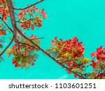 the flame tree on green... | Shutterstock . vector #1103601251