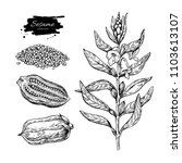 sesame plant drawing. hand... | Shutterstock . vector #1103613107