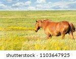 a herd of wild horses shown on... | Shutterstock . vector #1103647925