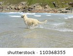 Golden retriever runs and jump in the sea - stock photo