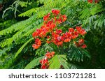 beautiful tropical red flowers. ... | Shutterstock . vector #1103721281