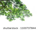 green leaf isolated on a white... | Shutterstock . vector #1103737844