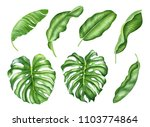 realistic tropical botanical... | Shutterstock . vector #1103774864