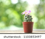 cactus pink mammalia on a... | Shutterstock . vector #1103853497