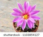 cactus pink mammalia on a... | Shutterstock . vector #1103854127
