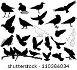 set of 21 birds and silhouettes ... | Shutterstock .eps vector #110386034