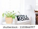 foliage plant and the window | Shutterstock . vector #1103866997