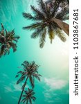 coconut palm trees   tropical...   Shutterstock . vector #1103867681