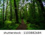 walking path in a beautiful... | Shutterstock . vector #1103882684