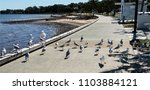 flock of hungry seagulls... | Shutterstock . vector #1103884121