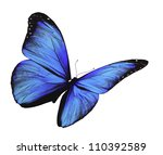 blue butterfly flying  isolated ... | Shutterstock . vector #110392589
