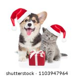 Pembroke Welsh Corgi Puppy And...